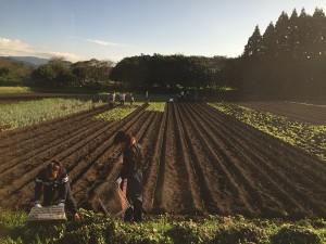 (2)身体に優しい野菜作りは重労働・・・JPG
